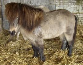 250ml Asvet 5-Kräuter-Lösung -Spezial- für Pferde, bei und nach Wurmbefall, Wurmkur Entwurmung - Bild vergrößern