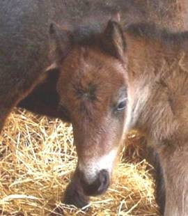 3 x Asvet Worm Stop flüssig für Pferde, Bio, keine chemische Wurmkur - Bild vergrößern