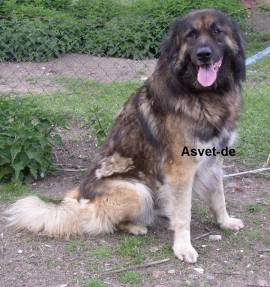 100ml Asvet 9-Kräuter Lösung -Spezial- für Hunde, bei und nach Wurmbefall, Wurmkur, Entwurmung - Bild vergrößern