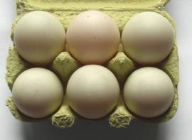5 + 1 frische Enteneier vom Bauernhof, Delikatesse ! Asia Thai Khai Pet - Bild vergrößern